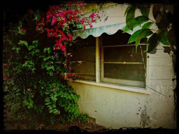 Photograph - Vintage Window Scene by Patricia Strand