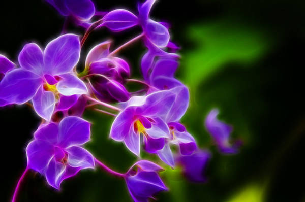 Blooms Digital Art - Violet Blooms by Ricky Barnard