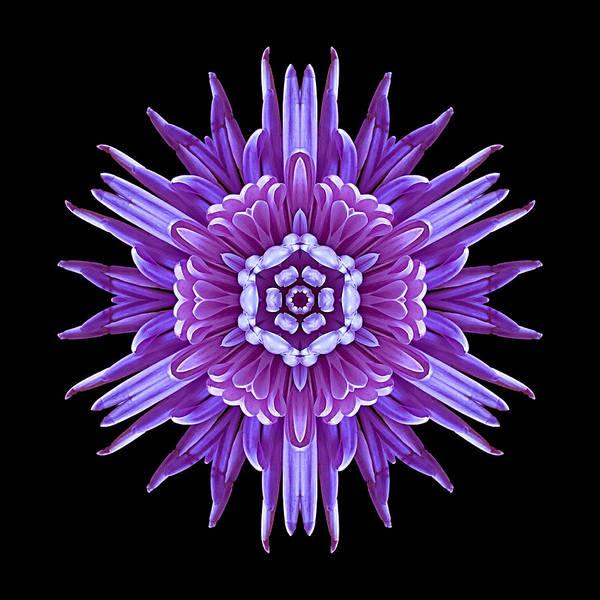 Photograph - Violet Chrysanthemum Iv Flower Mandala by David J Bookbinder