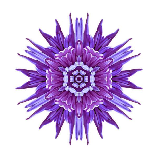 Photograph - Violet Chrysanthemum Iv Flower Mandala White by David J Bookbinder