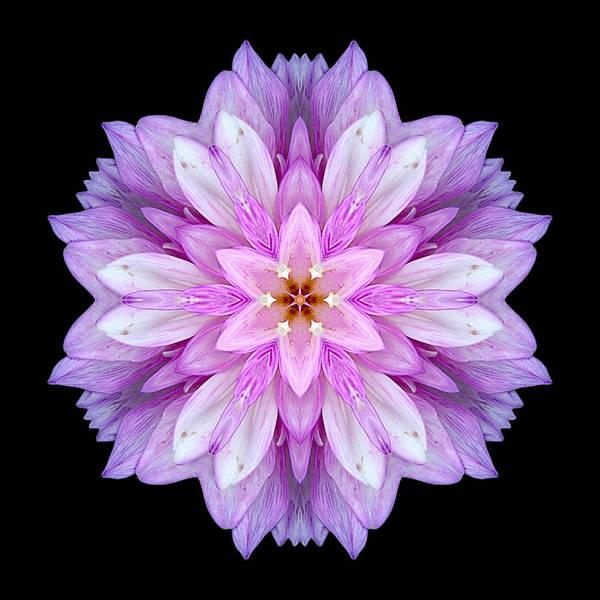 Photograph - Violet Dahlia I Flower Mandala by David J Bookbinder