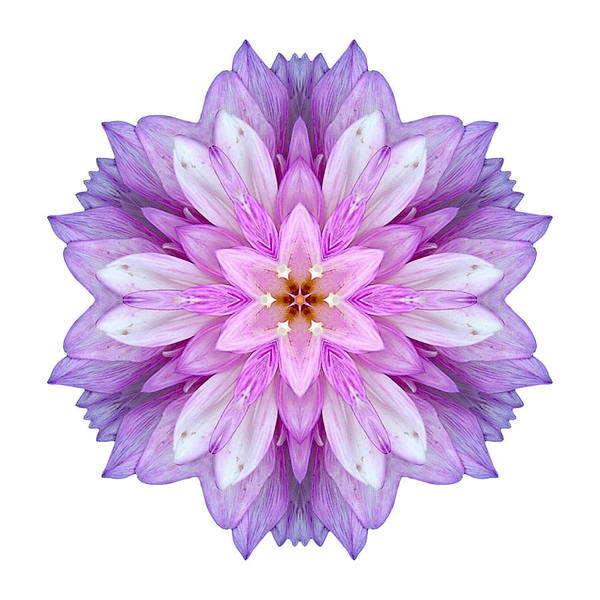 Photograph - Violet Dahlia I Flower Mandala White by David J Bookbinder