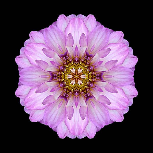 Photograph - Violet Dahlia II Flower Mandala by David J Bookbinder