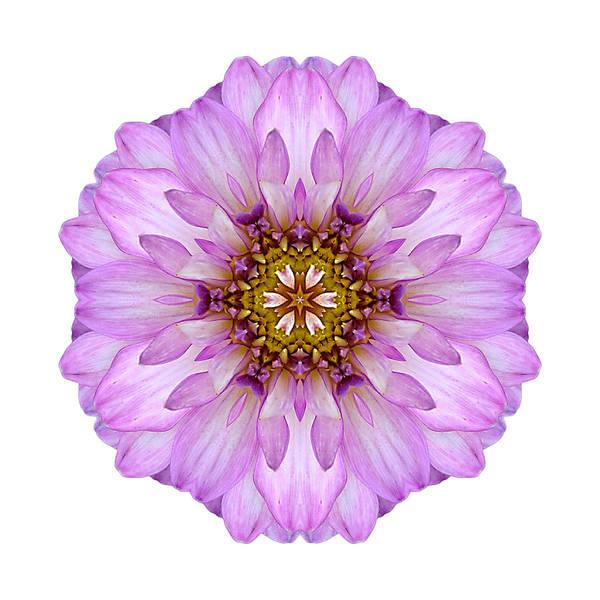 Photograph - Violet Dahlia II Flower Mandala White by David J Bookbinder