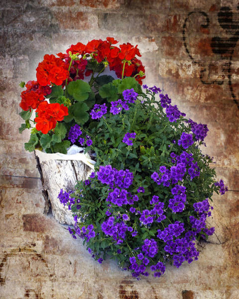 Photograph - Violets And Geraniums On The Bricks by William Havle