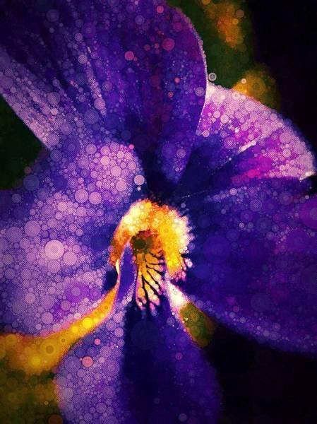 Photograph - Violetta by Susan Maxwell Schmidt