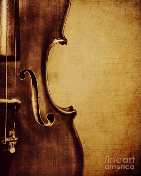 Violin Wall Art - Photograph - Violin Portrait  by Emily Kay
