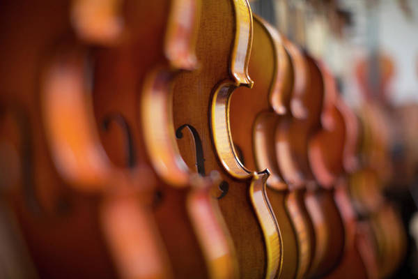 In Focus Wall Art - Photograph - Violins In A Row In A Shop by Eternity In An Instant
