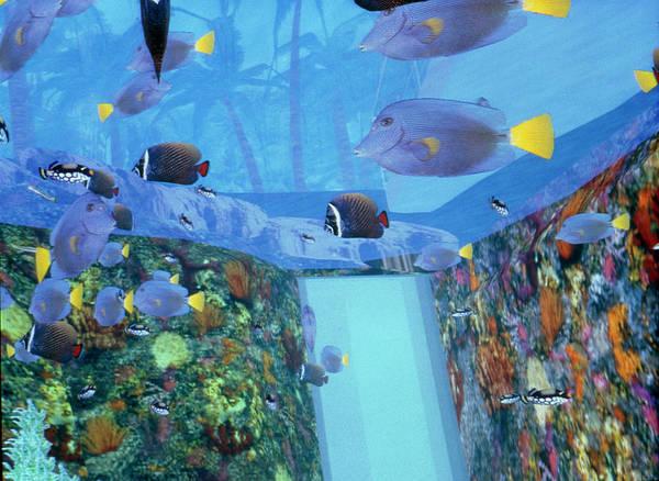 Fish Tank Photograph - Virtual Reality Tank Of The Lisbon Oceanarium by Dr Jurgen Scriba/science Photo Library