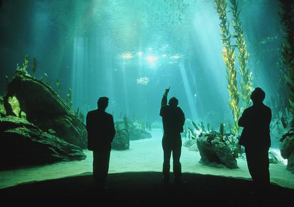 Fish Tank Photograph - Visitors View Of Lisbon Oceanarium's Main Tank by Dr Jurgen Scriba/science Photo Library