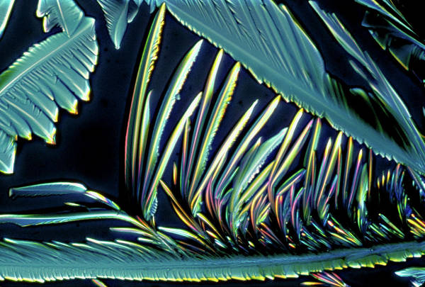 Wall Art - Photograph - Vitamin C Crystals by Dennis Kunkel Microscopy/science Photo Library