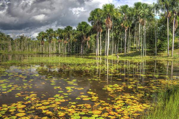 Lakes Region Photograph - Vitoria Regia Lake by Anfremon D´amazonas