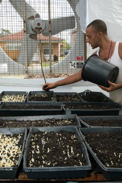 Security Service Photograph - Volunteer At An Urban Farm by Jim West