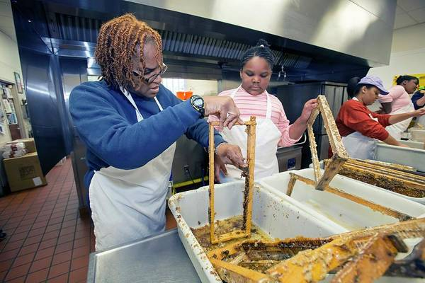 Non Profit Photograph - Volunteers Cleaning Honeycomb Frames by Jim West