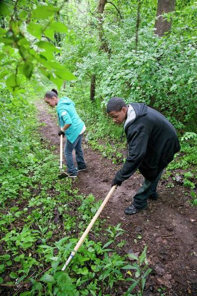Introduced Species Photograph - Volunteers Removing Invasive Plants by Jim West