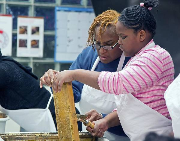 Non Profit Photograph - Volunteers Uncapping Honeycomb by Jim West