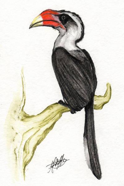 Hornbill Painting - Von Der Decken's Hornbill by Justin F C Miller