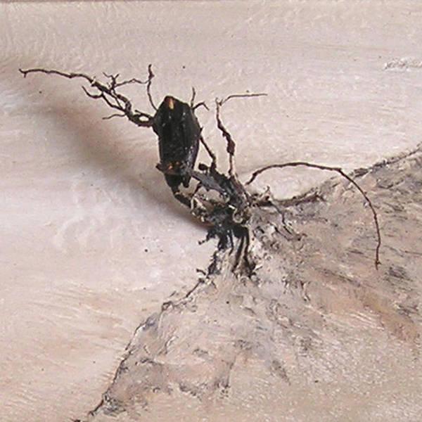 Painting - Vulture In Winter by R  Allen Swezey