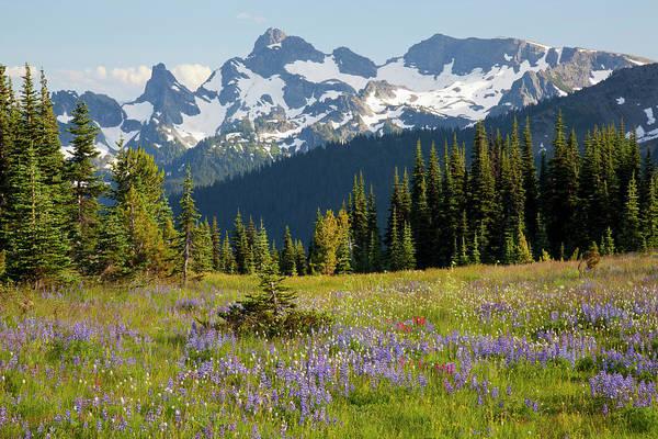 Alpine Meadows Photograph - Wa, Mount Rainier National Park, Alpine by Jamie and Judy Wild