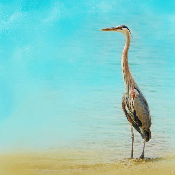 Photograph - Wading - Blue Heron - Wildlife by Jai Johnson
