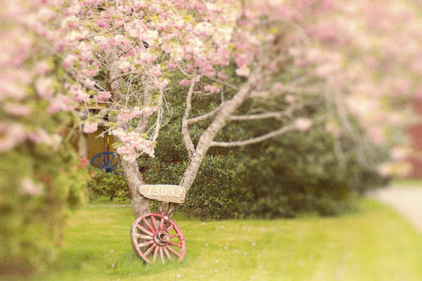Photograph - Wagon Wheel And Cherry Blossoms by Peggy Collins