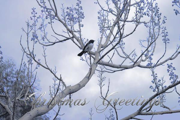 Photograph - Wagtail by Elaine Teague