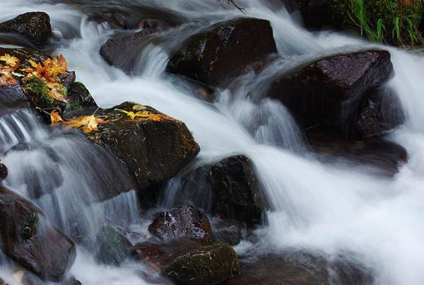 Photograph - Wahkeena Creek Detail 1 by Ken Dietz