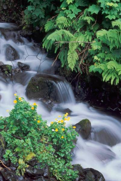 Photograph - Wahkeena Creek Spring by Ken Dietz