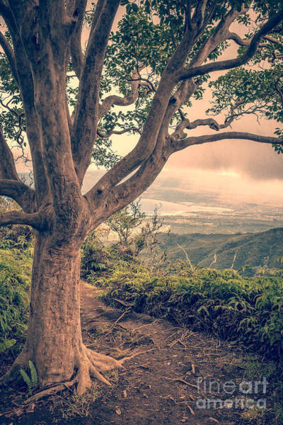 Maui Sunset Photograph - Waihee Ridge Trail Maui Hawaii by Edward Fielding