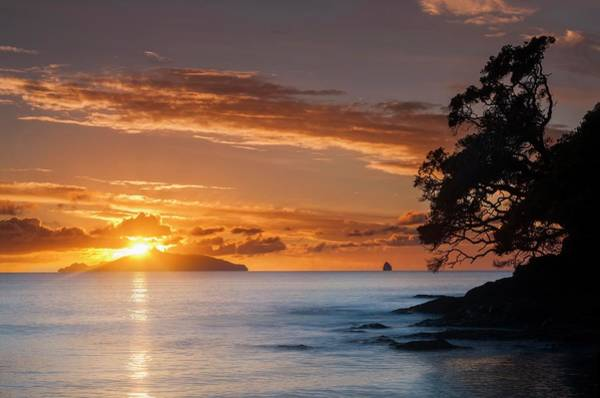 Pohutukawa Photograph - Waipu Cove Sunrise Behind Taranga Island by Robin Bush