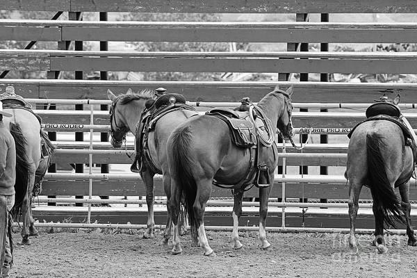Photograph - Waiting by Ann E Robson