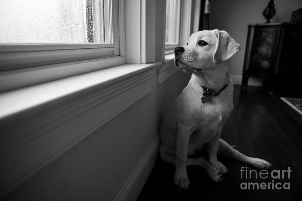 Unhappy Photograph - Waiting by Diane Diederich