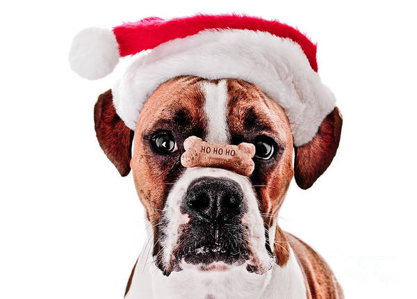 Dog Treat Photograph - Waiting For Christmas by Jt PhotoDesign