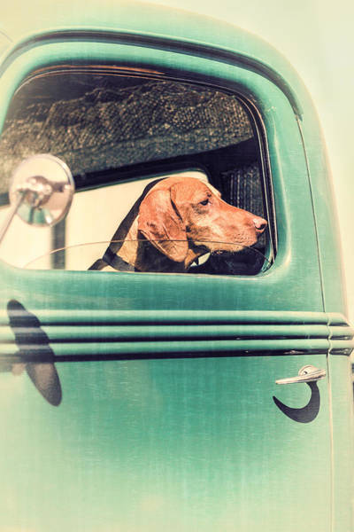 Hund Wall Art - Photograph - Waiting For His Master by Caitlyn  Grasso