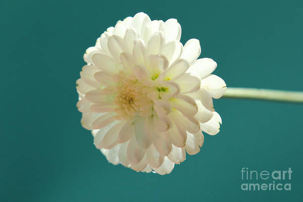 Mums Photograph - Waiting For Love by Krissy Katsimbras