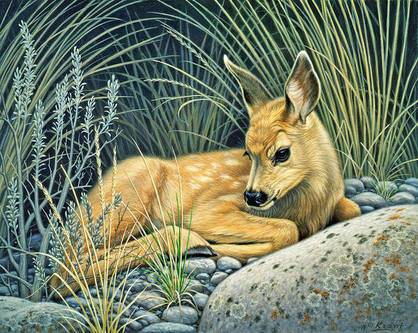 Deer Wall Art - Painting - Waiting For Mom-mule Deer Fawn by Paul Krapf