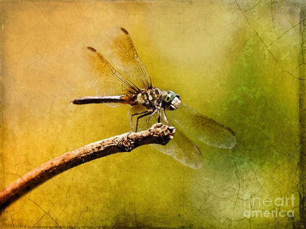 Blue Dragonfly Photograph - Waiting For My Date by Betty LaRue