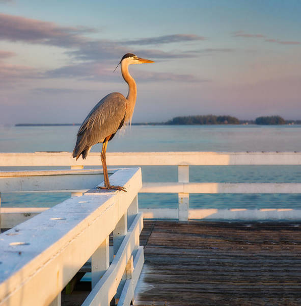 Waiting For The Fishing Boats To Arrive Art Print