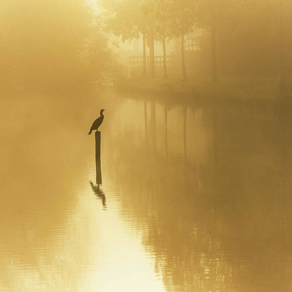 Golden Photograph - Waiting For The Sun .......... by Piet Haaksma