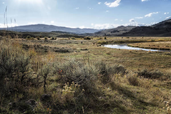 Photograph - Waiting For Wolves In Lamar Valley - Yellowstone by Belinda Greb