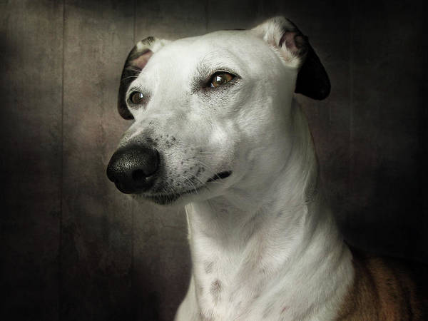 Canine Wall Art - Photograph - Waiting by Mandy Disher