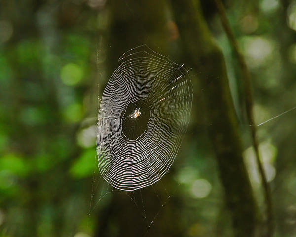 Photograph - Waiting On The Web by RockyBranch Dreams