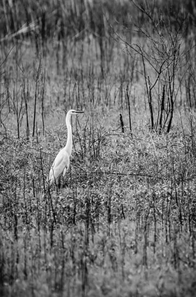 Photograph - Waiting by Steven Santamour