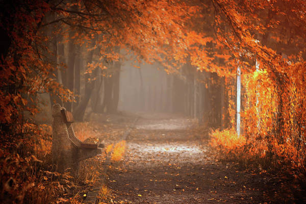 Orange Wood Photograph - Waiting To Fall by Ildiko Neer