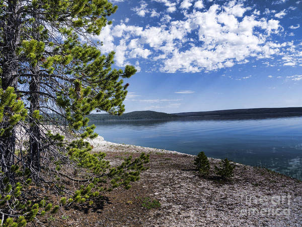 Photograph - Walk By Yellowstone Lake by Brenda Kean