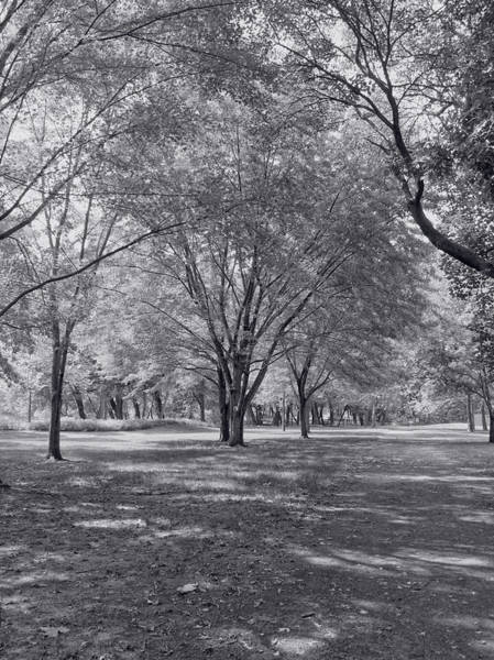 Photograph - Walk In The Park by Kim Hojnacki