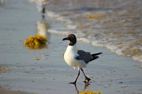 Photograph - Walk On The Beach by Candice Trimble