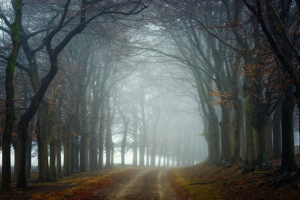 Foggy Photograph - Walk This Way by Ellen Borggreve