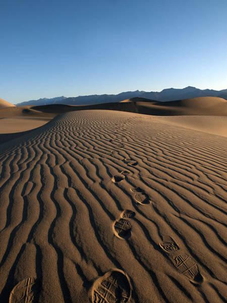 Grapevine Photograph - Walk This Way. No. This Way.  by Joe Schofield