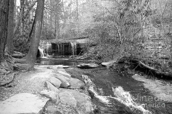 Photograph - Walk To The Waterfall by Carol Groenen